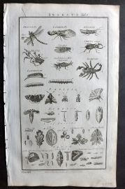 Howard 1796 Folio Print. Insects 63 Dragon Fly, Latern Fly, Locust, Scorpion